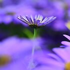 purple flower 2 by Ranbir Singh