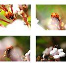 Journey of a Ladybug by TriciaDanby