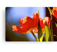 Bowls of sunshine Canvas Print