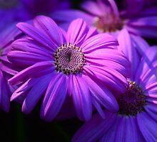 pink flower by Ranbir Singh