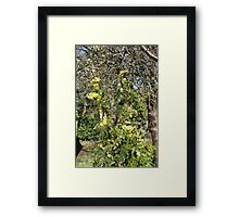 Volunteer Holly Tree Framed Print