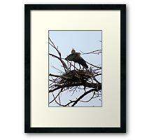 Rearranging the nest Framed Print