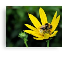 bee on a yellow flower.. Canvas Print