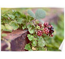 berries.. Poster