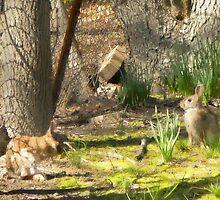 march 054 1 oil boxing rabbits by crescenti