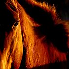 Abstract Equines by Penny Kittel