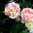 Peonies. by Jean-Luc Rollier
