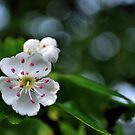 flower and bokeh! by Michelle McMahon