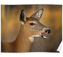 Profile of a Deer Poster