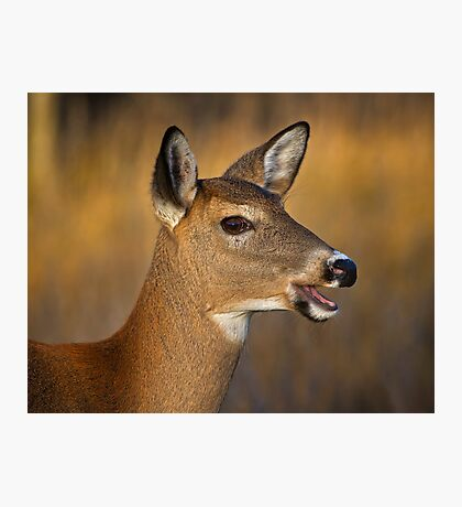 Profile of a Deer Photographic Print
