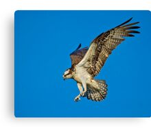 Cleared for Landing  Canvas Print