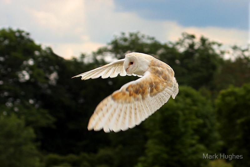 The Silent Flyby by Mark Hughes