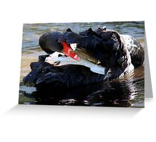 Black Swan Hiding Greeting Card