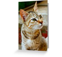 The Cat Eyes. Greeting Card