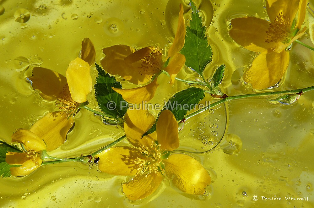Floral with oil and water by © Pauline Wherrell