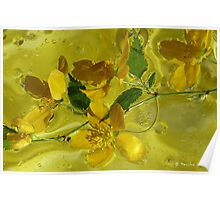 Floral with oil and water Poster