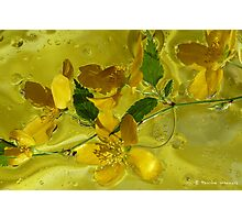 Floral with oil and water Photographic Print