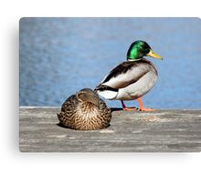 Life Is Just Ducky Canvas Print