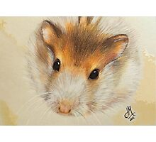 Bubba the Hamster Photographic Print