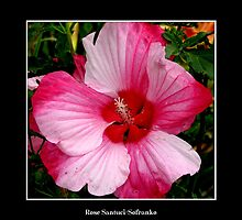 Hibiscus #2 by Rose Santuci-Sofranko
