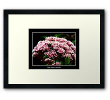 Pink Flower and bee Framed Print