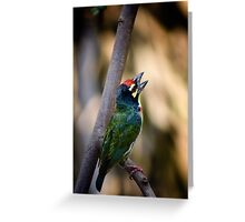 Coppersmith Greeting Card