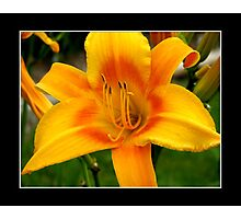 Day-Lily #1 Photographic Print