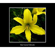 Lily: Yellow Photographic Print