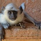 Don't Monkey Around With Me! by Lisa Baumeler