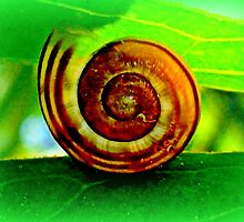 Translucent snail by ©The Creative  Minds