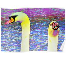 Swan pair macro Poster