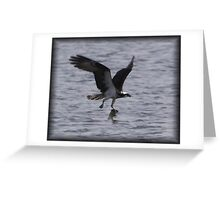 Osprey with lunch Greeting Card