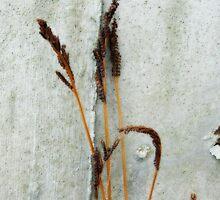 Ferns by Fay270