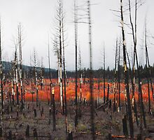 Undergrowth after a Brushfire- Oregon Plateau by Ashley Zeigler