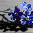 Forget-me-not by Kim Slater