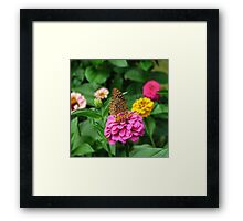 Butterfly and Zinnias Framed Print