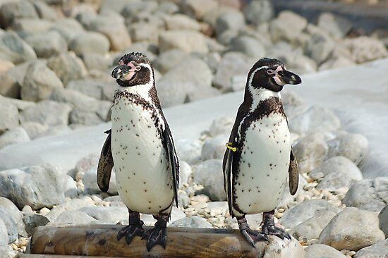 Penguins by linzi200