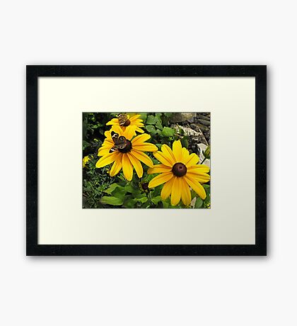 Yellow flowers and butterflies Framed Print