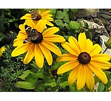 Yellow flowers and butterflies Photographic Print