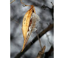 Forgotten - Milkweed Pod Photographic Print