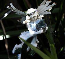 Garden Fairy by Evita