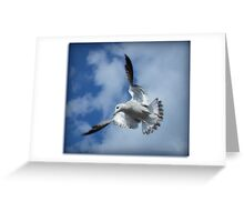 the flying gull Greeting Card