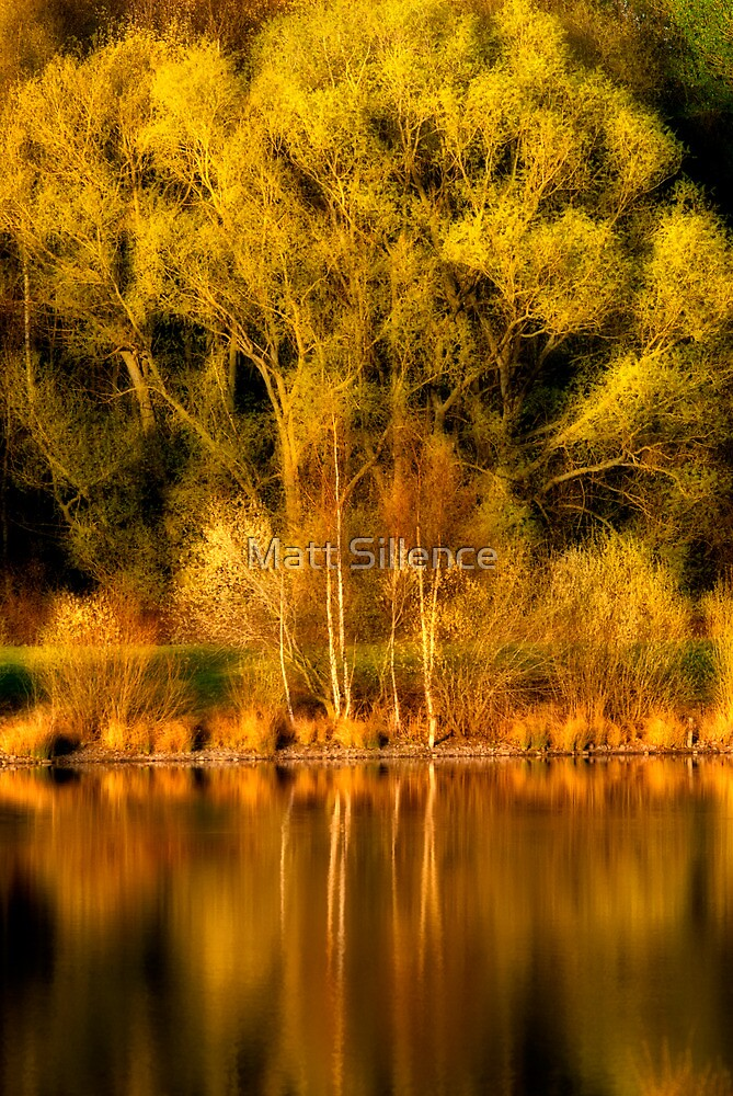 Venus Pool in Spring time by Matt Sillence