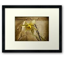 Spring is Fading Framed Print