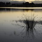 Tweed Reeds by Graham Mewburn
