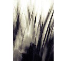 Spring Returns Photographic Print