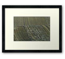 Ribbon Rows2 Framed Print