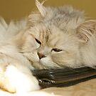 Sleepy Cat by Lou Wilson
