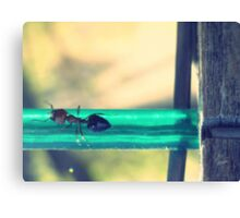 04-12-11:  Ants On The Clothesline Canvas Print