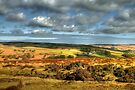 The North Yorkshire Moors by Christine Smith